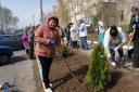 Галерея: Озеленення міста, 05.04.2017р.